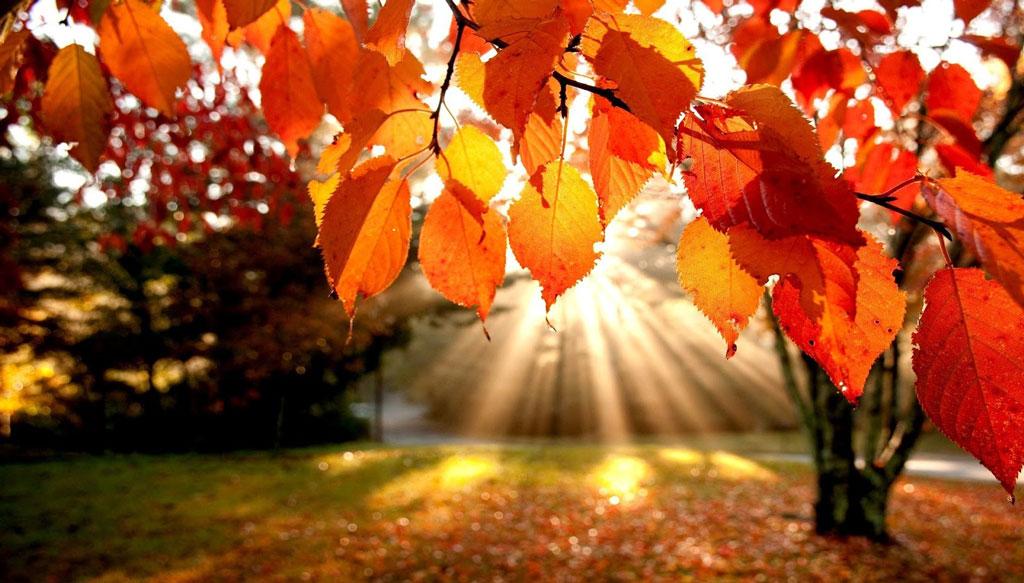 Autunno e i suoi colori | Cambia stagione cambiano abitudini